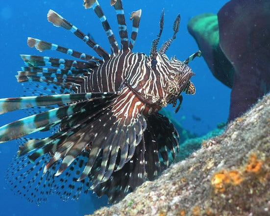 Lionfish Hunting in Playa Del Carmen