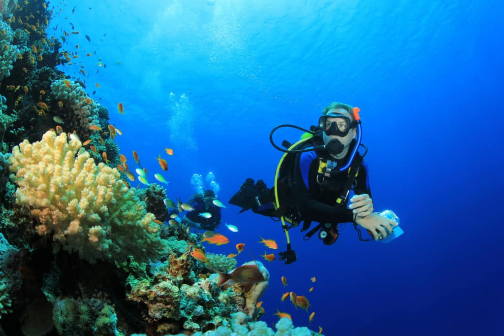 Blog diversity diving scuba diving in playa del carmen - Dive shop mexico ...